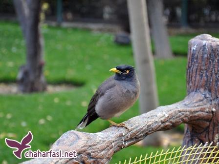 باغ خزندگان و باغ پرندگان اصفهان
